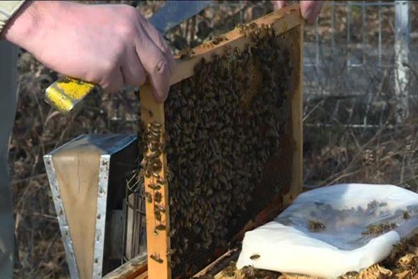 Températures printanières : les abeilles se réveillent !