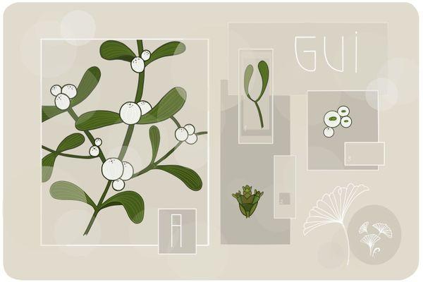 Première d'une série de 12 planches botaniques, le gui. Avec en 1 son rameau, en 2 son bourgeon et en 3 sa baie.
