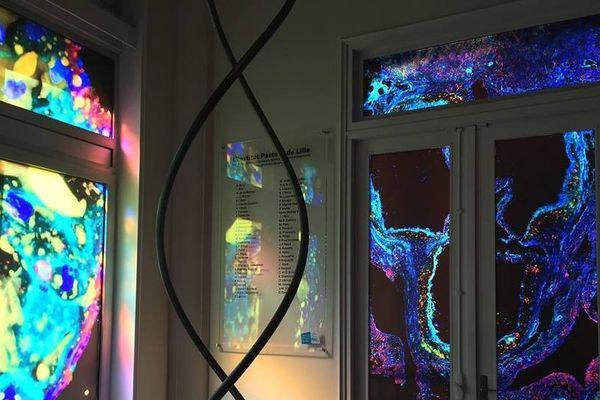 La « salle du présent et du futur » avec sa molécule d'ADN géante