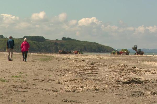 La plage d'Hillion (Côtes-d'Armor) est recouverte d'une couche épaisse d'algues vertes, sur laquelle s'est formée une croûte blanche.