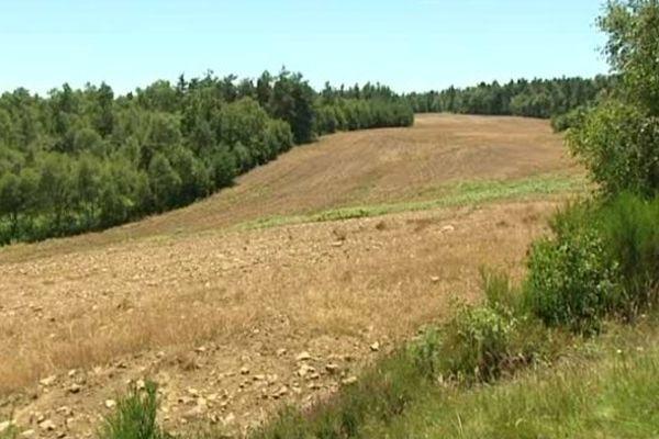 Zone pare-feu traitée massivement par des produits phytosanitaires dans le camp de La Courtine