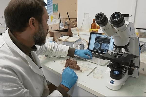 Dix-huit chercheurs du monde entier scrutent durant trois semaines à Concarneau des centaines d'espèces subaquatiques de Nouvelle-Calédonie.