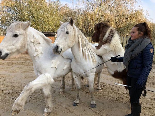 Elisa Laville au travail avec ses poneys