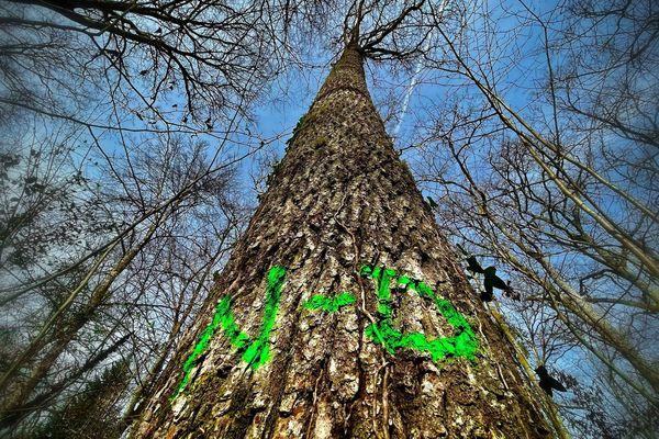 N-D... Ainsi estampillé, cet arbre a été choisi pour la reconstruction de la charpente de Notre-Dame de Paris.