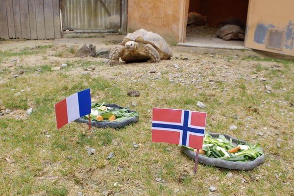 Ariane la tortue a fait son pronostic pour France-Norvège du 12 juin 2019