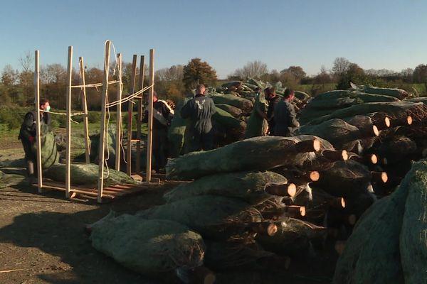 Sapin d'Anjou vend chaque année 60 000 sapins avant les fêtes de Noël.