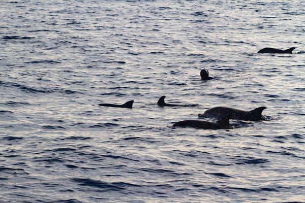 Lors de son périple, Michel Nox a nagé avec des dauphins