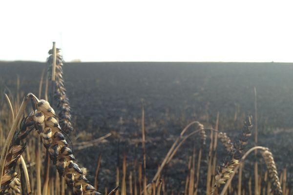 Dans l'Eure, plus de 200 hectares ont été détruits jeudi 16 juillet 2015.