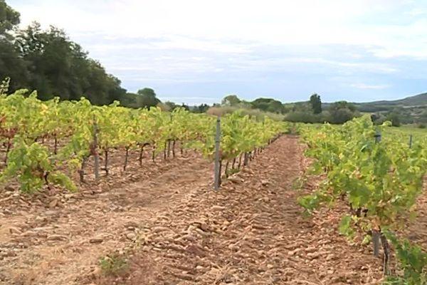 Saint-Laurent-des-Arbres (Gard) - des harkis ont été enterrés sans sépulture dans les vignes proches du camp de Saint-Maurice-l'Ardoise entre 1962 et 1963 - 2019.