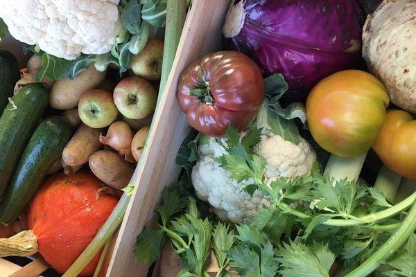 Un panier de légumes de saison : voila ce que proposent les Marchés de Max et Lucie, une épicerie de producteurs locaux.