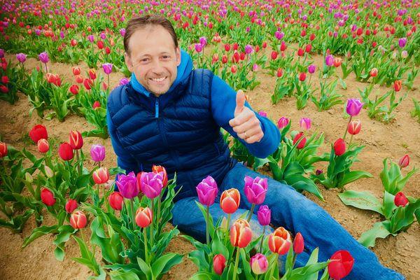 Geoffroy Korsel, éleveur laitier dans un champ de tulipes
