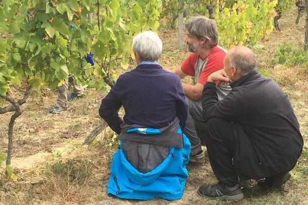 Apprentis-vendangeurs dans les vignes du château Belaygues à Labastide S&aint-Pierre (82).