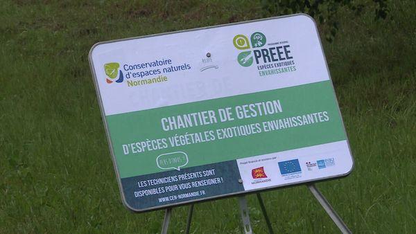 Juin 2021- Présence de la plante invasive Crassule de Helms dans un étang de Port-Jérôme-sur-Seine (Seine-Maritime)