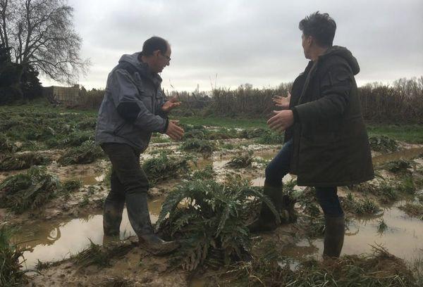 Villelongue-de-la-Salanque, ce vendredi 24 janvier : la montée de la Têt a submergé les cultures de ce maraîcher