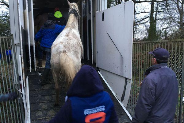 106 chevaux sauvés en Vendée par la fondation 30 millions d'amis