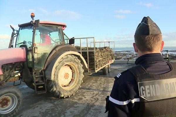 Contrôle du transport des poches d'huîtres sur le port de la houle à Cancale par la gendarmerie.