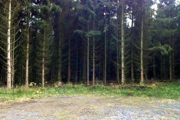 Bois de La Neuville-aux-Joûtes où le corps d'un homme a été découvert ce jeudi 29 novembre 2012.