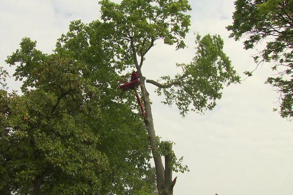 Des arbres multi centenaires sont abattus en marge du  projet de fusion de l'hôpital Robert-Picqué et de la clinique Bagatelle. Les associations montent au créneau.