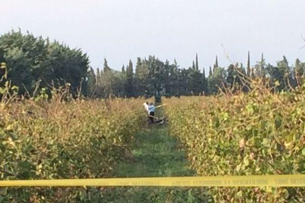 C'est dans ce champ de vigne à Beaucaire que s'est écrasé un petit avion ce vendredi aux alentours de midi - 26 octobre 2018