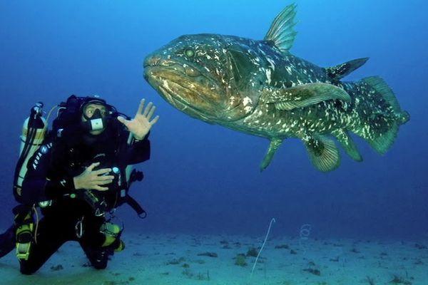 Le cœlacanthe, ce poisson emblématique, est bien plus vieux qu'on ne le pensait