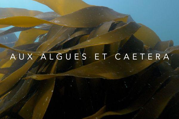 le documentaire du lundi à 23h20 : Aux algues et caetera