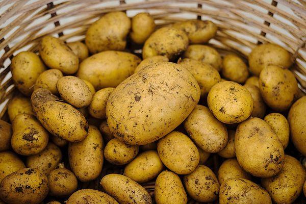 Les producteurs de pomme de terre sont en difficultés face aux conséquences de la crise du coronavirus, sauf en Alsace où la production s'écoule principalement en vente directe.