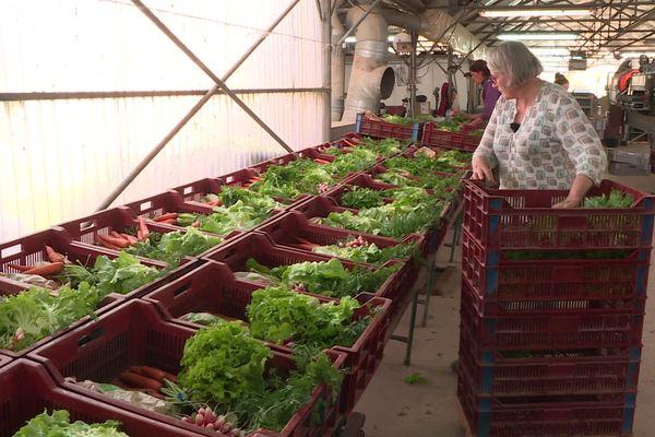 Traditionnellement, chaque semaine, des caisses de légumes variés sont livrés aux consommateurs engagés auprès de l'AMAP.
