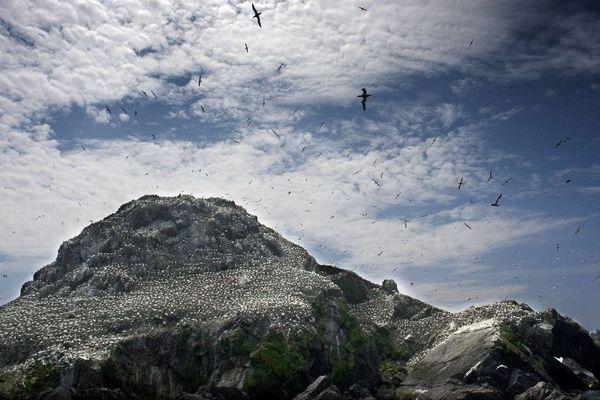 Au mois de mai 2012, la Ligue pour la Protection des Oiseaux fêtait ses 100 ans, en 1912, la LPO avait créé la réserve naturelle des Sept-Iles (Perros Guirec - Côtes d'Armor)