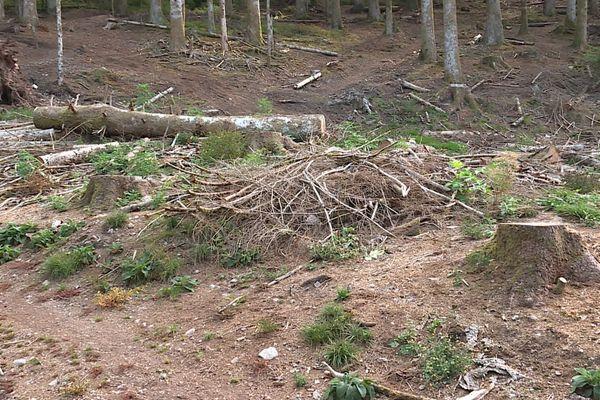 La forêt est tellement asséchée, les sols poudreux, avec tous les bois morts au sol : la moindre imprudence et la forêt vosgienne peut s'embraser comme dans le Sud de la France.