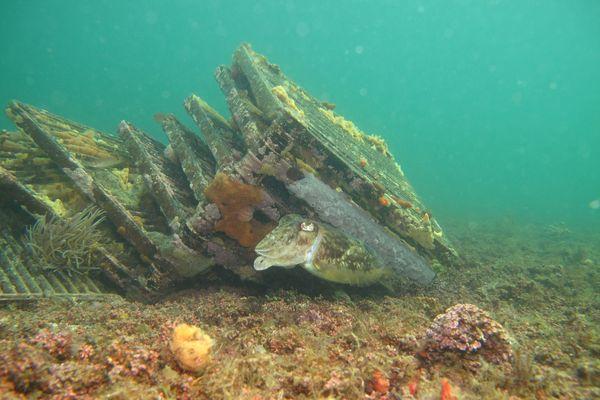 Des macro-déchets encombrent les fonds marins et perturbent les espèces qui y vivent comme le maërl