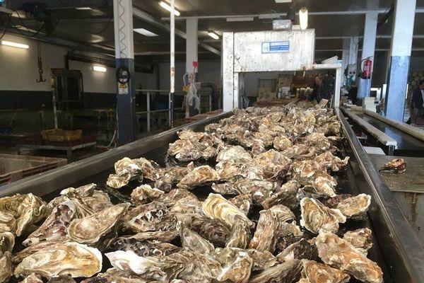 Les huîtres de Cancale seront-elles inscrites au patrimoine culturel immatériel de l'UNESCO ?