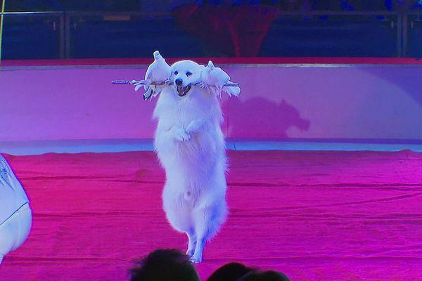 La grande fête du cirque de Lille utilise des animaux domestiques pour ses spectacles