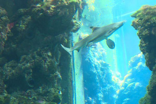 Une plongée en immersion au milieu des poissons et des cétacés.