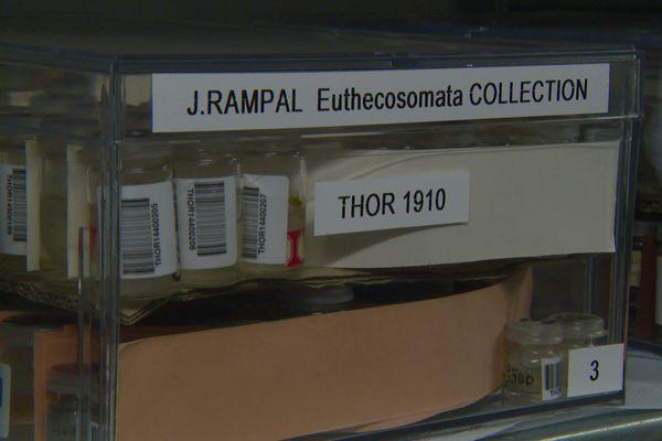 Le plus ancien échantillon de zooplancton conservée à Villefranche date de 1910.