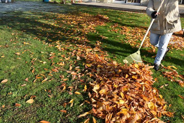 Un plaisir de redécouvrir le vert de l'herbe sous le tapis de feuilles.