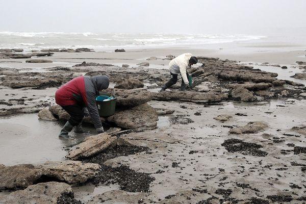 Les pêcheurs à pied notamment doivent redoubler de vigilance face au retour de la marée. Photo ici prise à Wimereux