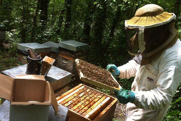 Jean Christophe Housieau, apiculteur à Moissat (63). Alors qu'il devrait commencer sa récolte de miel, il est obligé de nourrir ses abeilles pour les conserver. La faute aux aléas climatiques : acacias gelés, la pluie et le vent ont bloqué la montée du nectare