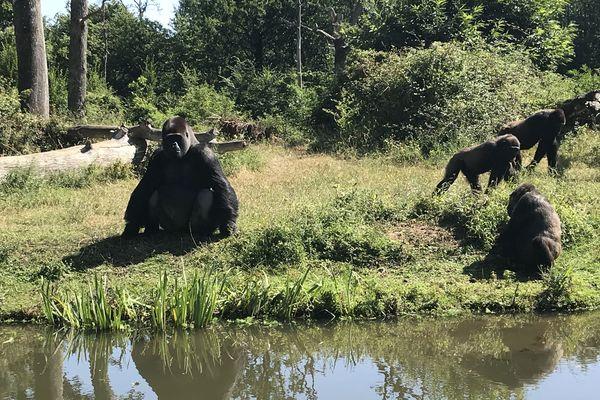 La Vallée des singes s'apprête à ouvrir