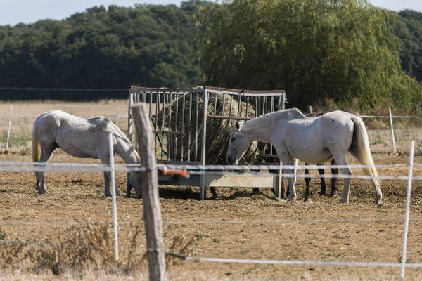 Les cheval, dont les propriétaire habitent à Mouhet, dans l'Indre, a été retrouvé mort dans un pré. Photo d'illustration