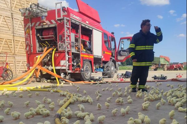 Merville : un incendie se déclare dans un bâtiment agricole, 20 000 poussins tués