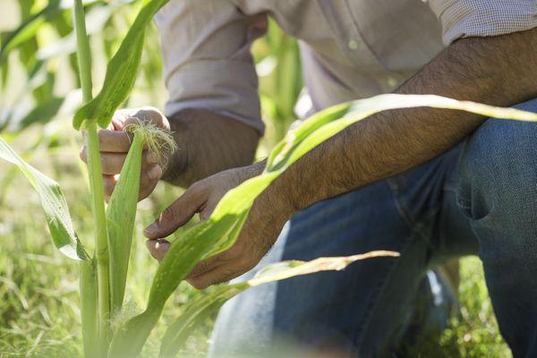 Agriculteur, un métier difficile et parfois solitaire