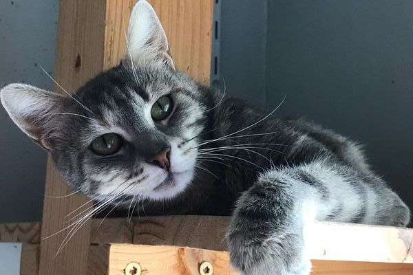 La SPA de Strasbourg a besoin de bénévoles pour gérer l'afflux massif de chatons