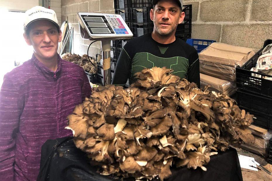 """INSOLITE. Un champignon comestible géant trouvé dans la forêt d'Argonne: """"il fait le poids d'un enfant"""""""