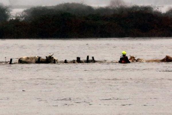 10/02/14 - Troupeaux pris au piège lors des inondations dans la région de Sagone en Corse-du-Sud