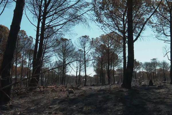 Hérault - 300 hectares de pinède brûlés entre Saint-Pargoire et Villeveyrac - 19 aout 2021.