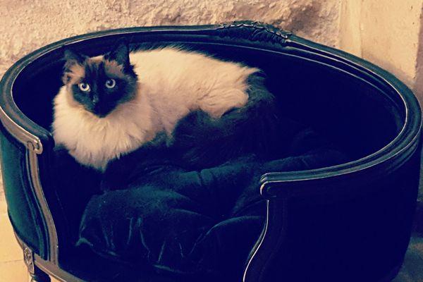 Le chat est l'animal préféré des Français. En 2017, on en dénombrait plus de 13 millions dans les foyers de l'hexagone.