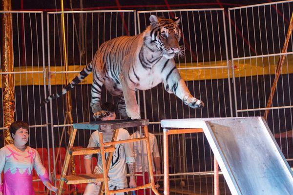 Un cirque en Chine