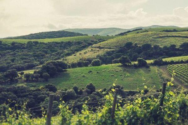 Le territoire de l'AOP Faugères s'étend sur 7 communes rurales au nord de Béziers et rassemble 144 viticulteurs, dont 60 vignerons.