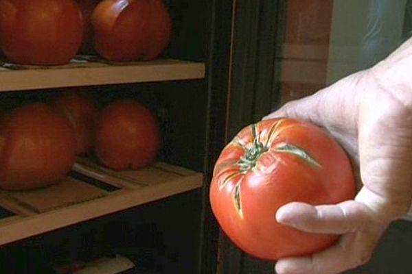 Pézenas (Hérault) - les tomates de luxe coûtent 20 euros pièce - juillet 2015.