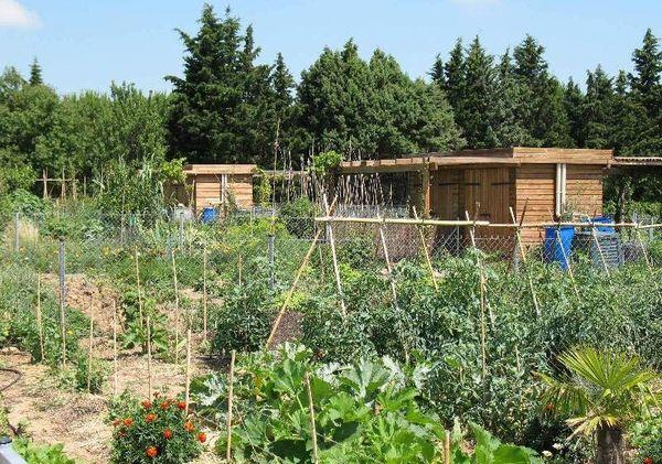 Les jardins familiaux existent depuis 2004 à Montpellier. Il y en a 158 répartis en 3 zones sur la commune.